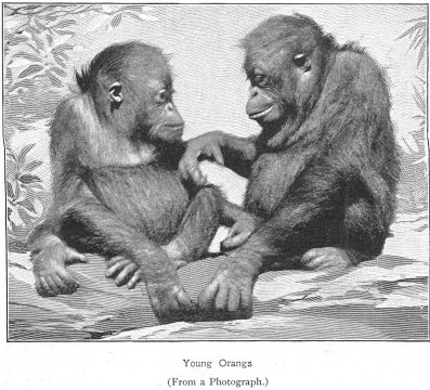 apes and language So dogs may be smart and dilligent, but they do not have language what about apes after all, apes are closer to us genetically, and chimps — our closest relatives in the animal world — share about 984% of dna with us.