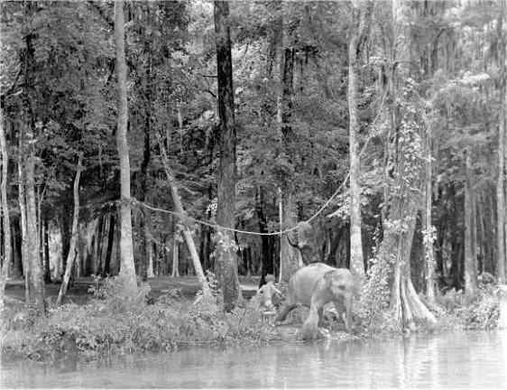 Erbzine 0501 Weissmuller In Florida